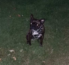 Zadie trying to look Gansta with her cute flappy ears in Ally Pally!